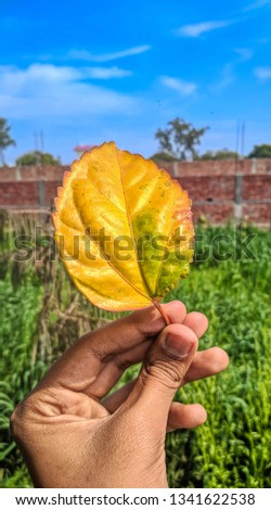 Here is pic of Autumn leaf in the Hand,sunny day with bright colors of nature