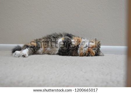 Here, Kitty Kitty #1200665017