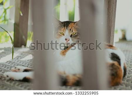 here kitty kitty #1332255905