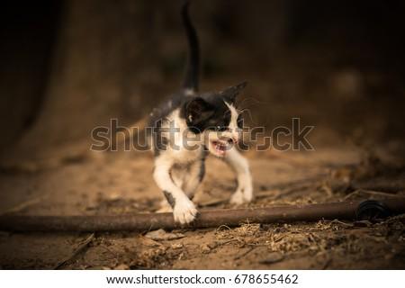 here kitty kitty kitty #678655462