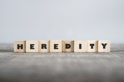 HEREDITY word made with building blocks