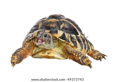 Herman tortoise with happy enthusiastic expression