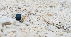 Hermit crab carrying a plastic bottle cap. Concept of the problem of ocean pollution caused by plastic waste.