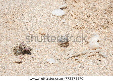 Hermit crab crawling on natural beach shell and sand texture on Mystery Island, Vanuatu #772373890