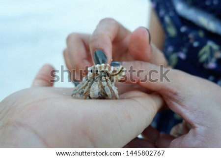 hermit crab grows in size, it must find a larger shell and abandon the previous one. Several hermit crab species, both terrestrial and marine, in adang island Thailand #1445802767