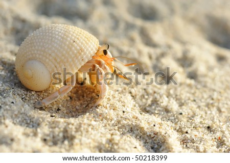 Hermit Crab on a beach in Andaman Sea