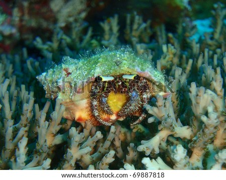 hermit crab on a coral - stock photo