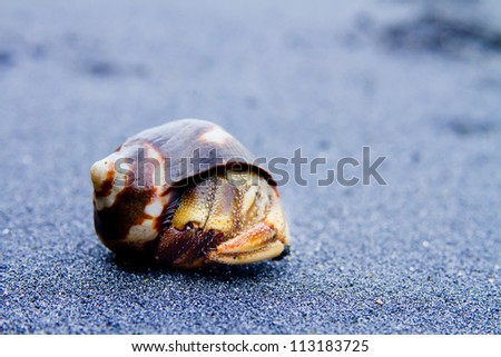 Hermit Crab on black sand close up