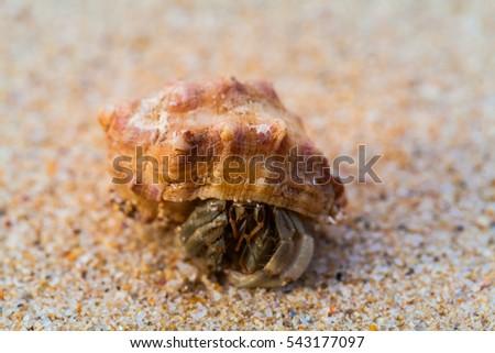 hermit crab walk on the beach #543177097