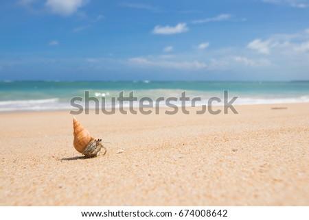 Shutterstock Hermit crab walking on the golden sand Beach