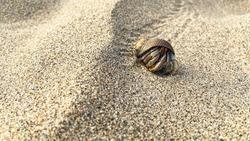 Hermit crab walking through the sand on the beach.