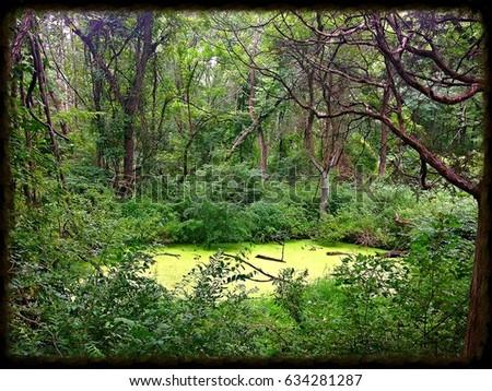Hermit's Pond