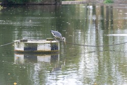 heron admires its own reflection in water with light shimmering in the background and autumn leaves floating on the surface of the river