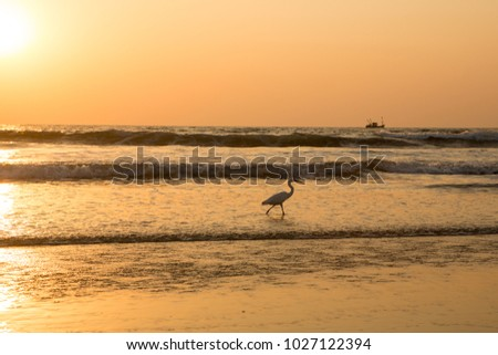 Heron at sunset collects shellfish on the beach #1027122394