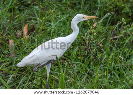 Heron bird. Sri Lanka. #1262079046