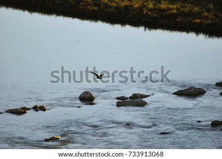 Heron flying. Birds in the river sitting on the rocks of the river.