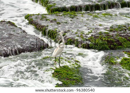 Heron in nature on the sea shore on the rocks