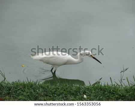 Heron in Pampulha Lagoon, Belo Horizonte, Brazil.
