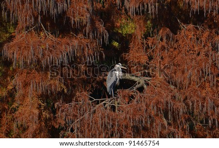 heron in the foliage background