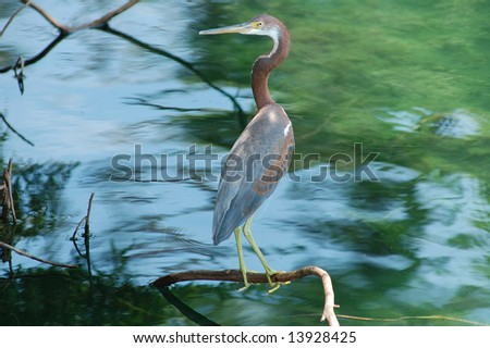 Heron on a branch.