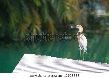 Heron on a grate.