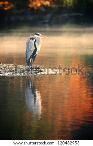 Heron standing over the pond - AUTUMN VIEW - stock photo