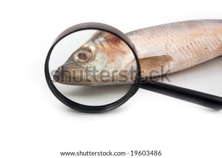 glass eyes fish | eBay - Electronics, Cars, Fashion, Collectibles