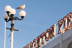 Herring gull keeping watch, with defocused Brighton Pier sign