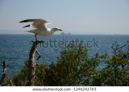 Herring gull (sea gull) on the Adriatic sea #1246242763
