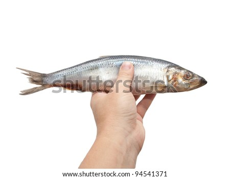 herring in his hand on a white background