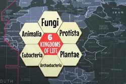 hexagon, a map of the world with the words six kingdoms of life