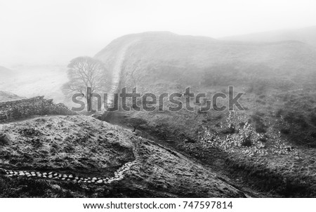 Hexham, Northumberland, UK. Sycamore Gap in autumn with a view of Hadrian's Wall following contours of hills and a a bright clouded sky in Northumberland National Park near Hexham, Northumberland, UK. #747597814