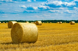 Hey bale. Farming with the sky. Rural nature in farmlands. Straw in the meadow. Wheat yellow-golden harvest in summer.