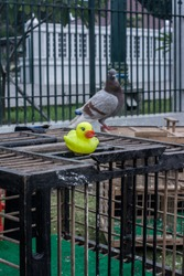 Hey Birdie, you don't fly? Hey Birdie, I'm talking to you! Hey Birdie, why are you quiet?