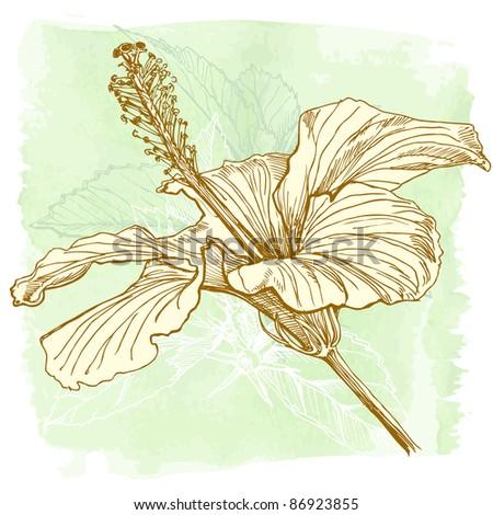 Hibiscus flower - hand draw. Bitmap copy my vector id 11813659