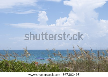 Hidden beach. The view through the tall grass on the ocean, blue sunny sky with dramatic clouds and 2 umbrellas