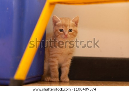 hidden kitty exploring her new home  - Shutterstock ID 1108489574