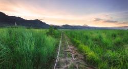 Hidden Railway in the cane fields Bais Negros Oriental, Philippines