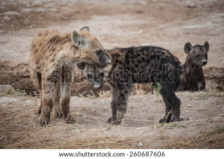 Hienas in Kenya #260687606