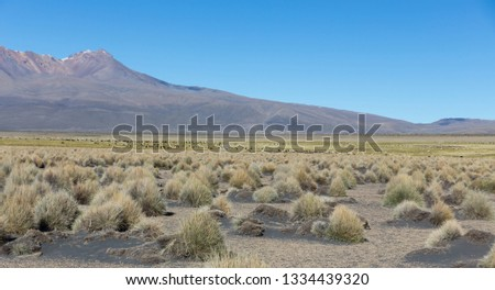 High Andean tundra landscape in the mountains of the Andes. The weather Andean Highlands Puna grassland ecoregion, of the montane grasslands and shrublands biome. #1334439320