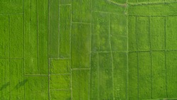 High angle image, green rice field plot