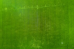 High Angle Rice Field Images