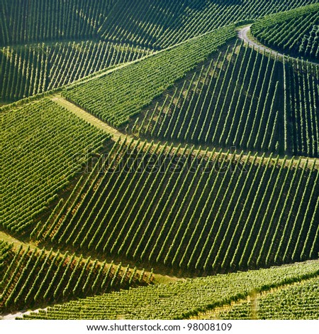 High angle view of a vineyard. Square shape - useful file for your brochure about your wine business, agriculture, agrotourism  and everything related to. - stock photo