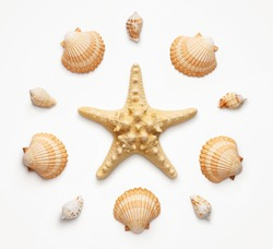 High angle view of seashells and starfish isolated on light gray background