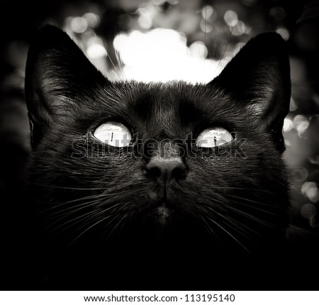 high contrast black and white cat portrait