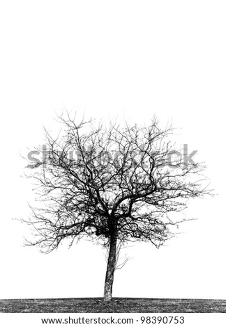 High contrast black and white silhouette of single leafless crab apple tree in a field.  Vertical, isolated on white background, copy space.