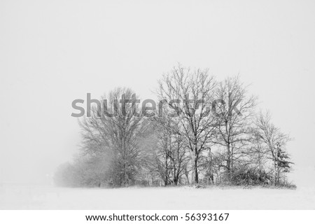 High contrast image of trees in a snow storm.