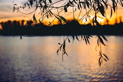 High contrast photograph of setting sun over a lake seen through the silhouette of a weeping willow. The sunset and the willow's branches are reflected in the water.