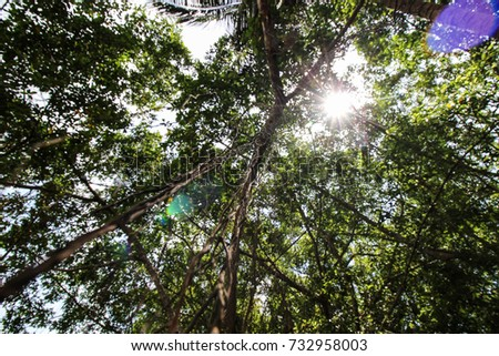 High deciduous trees in deciduous forest and blue sky #732958003