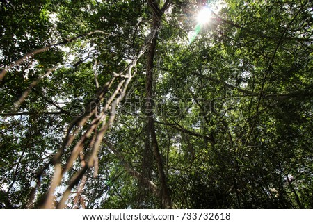 High deciduous trees in deciduous forest and blue sky #733732618